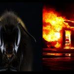 Incendi e siccità piaghe per le api: miele e impollinazione a rischio