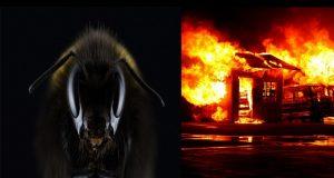 moria di api 2017 per incendi e siccità