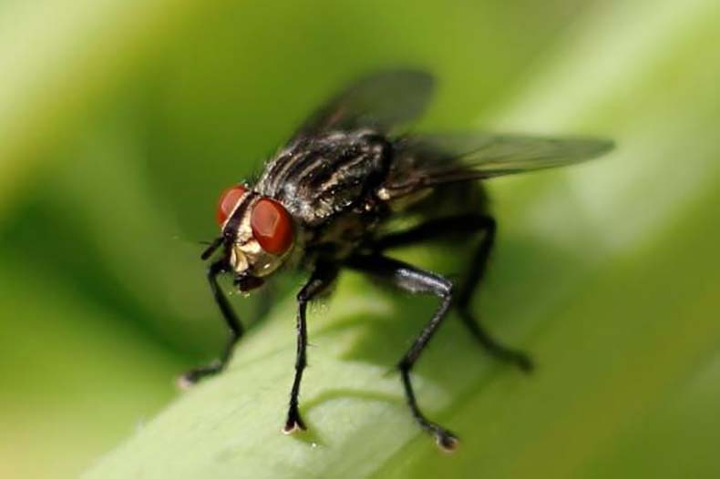 Rimedi contro le mosche 6 metodi naturali per scacciarle - Rimedi per le formiche in casa ...