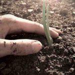 Cosa piantare a ottobre: mini-guida per il tuo orto fai da te