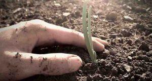 cosa piantare a ottobre