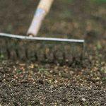 Orto fai da te: cosa piantare a novembre e quando