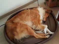magnetoterapia per animali