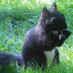 Nuove specie animali: sono 3 le nuove scoperte in Italia