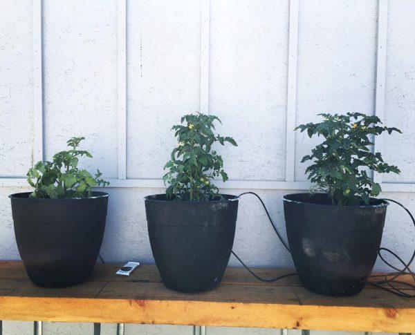 fertilizzante bio