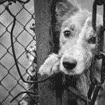 Maltrattamento animali e violenza sessuale: veterinario condannato a 3 anni