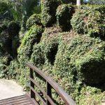 Parchi naturali italiani a rischio: firma la petizione da inviare al Governo