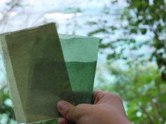 packaging biodegradabile alghe