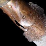 Tubature congelate in casa? Ecco come intervenire efficacemente