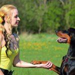 Cibo per animali e cure veterinarie tassate come beni di lusso: l'appello della LAV