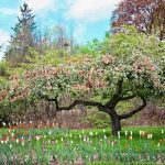Come fare un giardino ecosostenibile