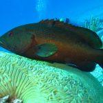 Pesci della barriera corallina minacciati: il lato oscuro dietro il commercio ittico