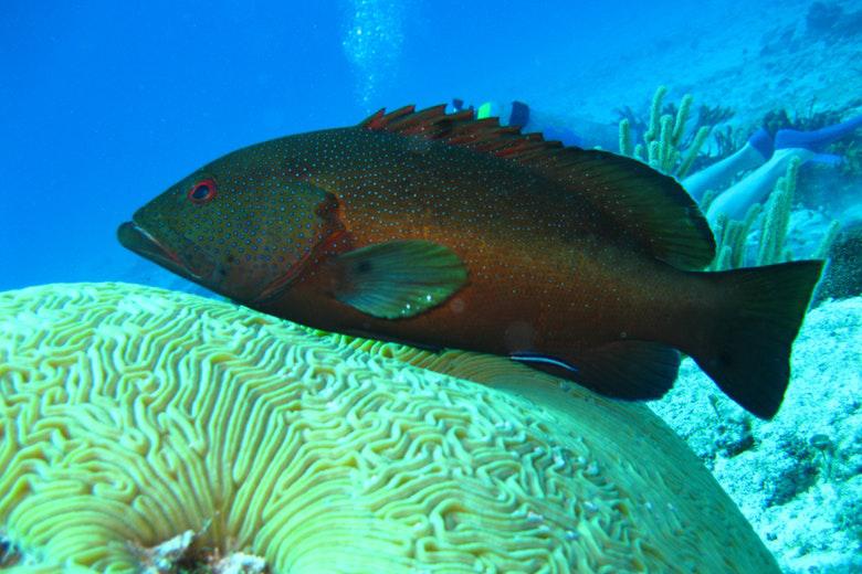 pesci della barriera corallina
