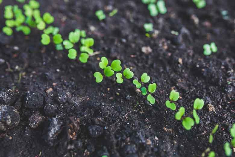 Cosa piantare ad aprile in orto e in vaso e quali lavori for Cosa piantare nell orto adesso