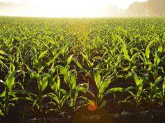 regolamento biologico nuovo