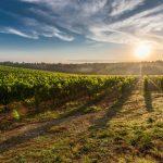 Colline del prosecco, stop alla candidatura Unesco: pesticidi colpevoli