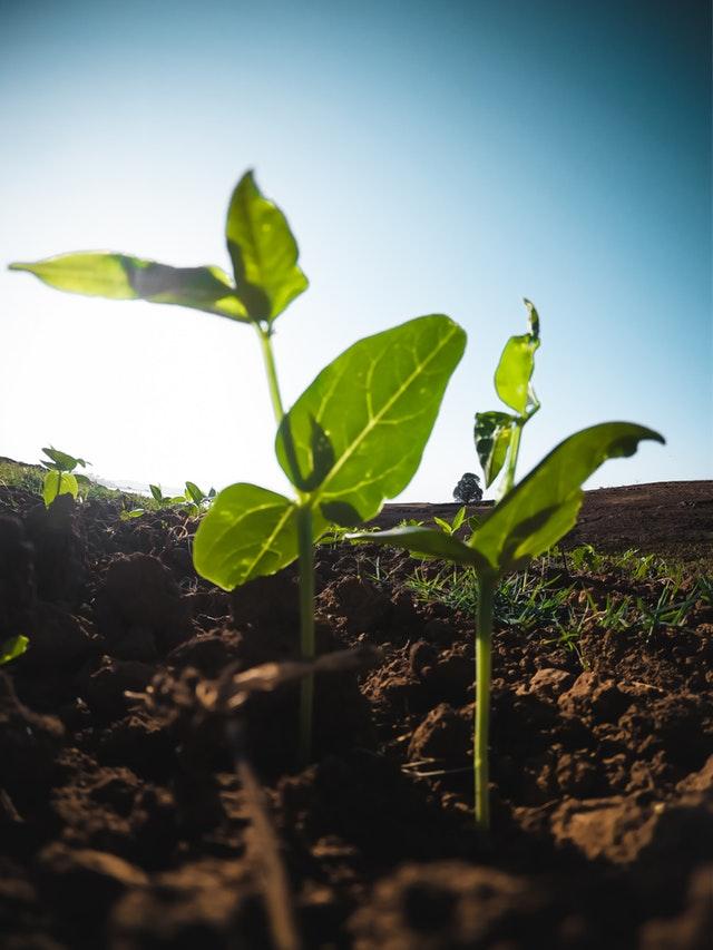 coltivazioni in pieno campo a maggio