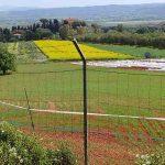 Insetticidi neonicotinoidi anti-Xylella: un decreto impone di inondare i campi di veleni