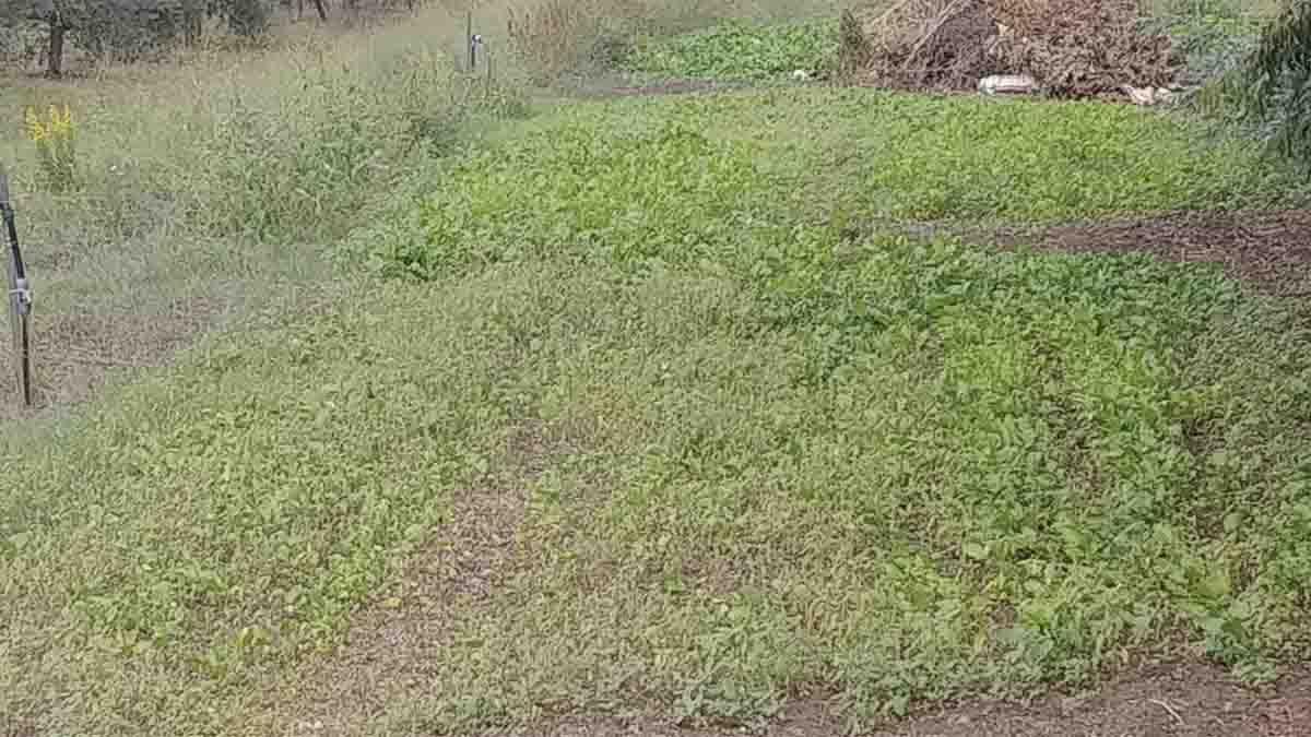cosa seminare a ottobre pieno orto broccoletti