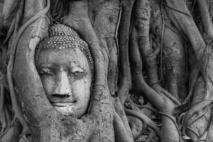 Banyan albero sacro indiano