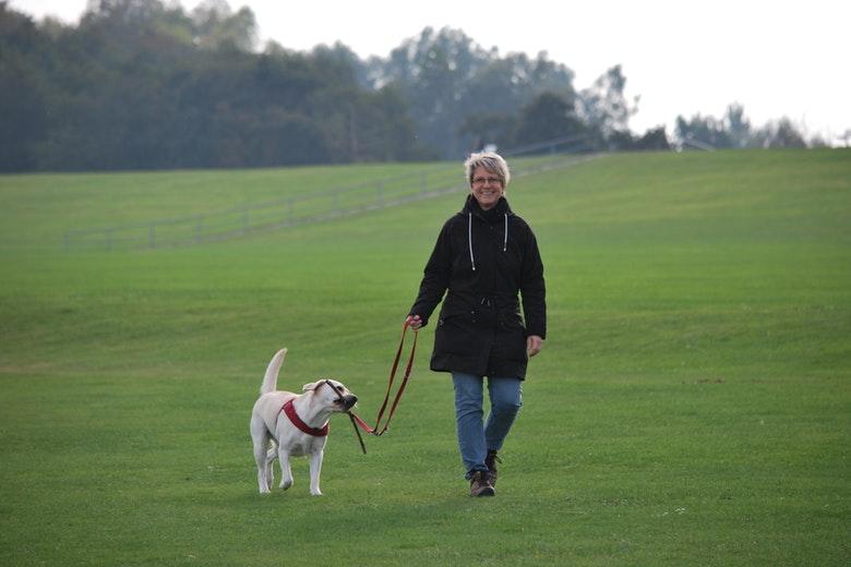 guinzaglio come portare il cane