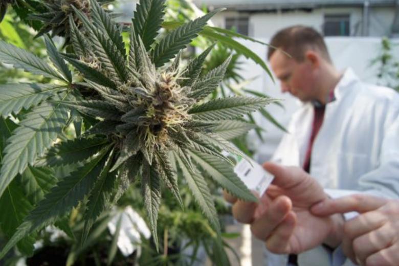 monopolio cannabis