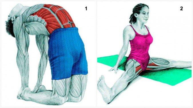Stiramenti muscolari: Allungamento muscolare del cammello