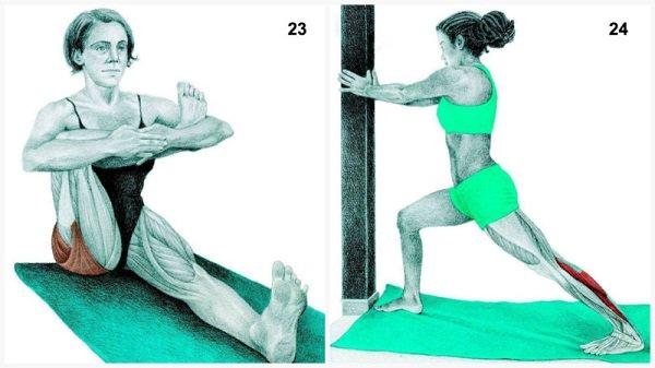 Stiramenti muscolari:muscolo che si estende postura del piccione