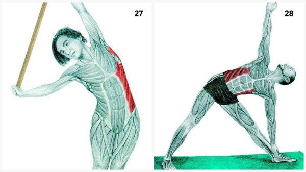 Stiramenti muscolari:il muscolo si allunga piegandosi con la canna