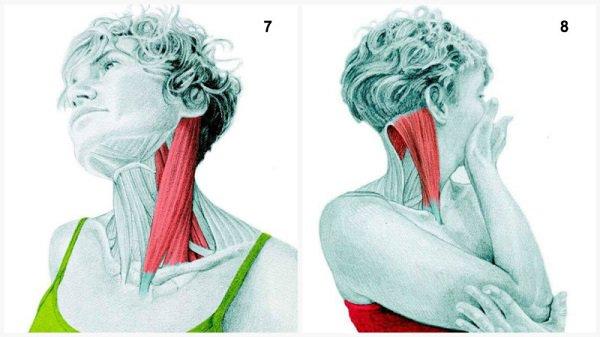 Stiramenti muscolari:Si estende il muscolo del collo