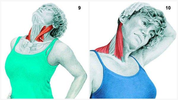 Stiramenti muscolari:il muscolo distende le flessioni del collo