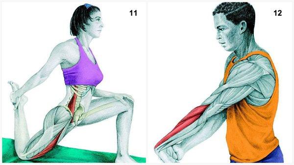 Stiramenti muscolari:muscolo allunga l'avambraccio