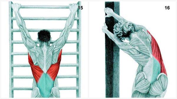 Stiramenti muscolari:si estende il muscolo della spina