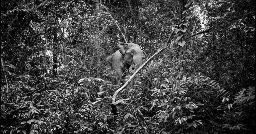pirelli gomma naturale elefante
