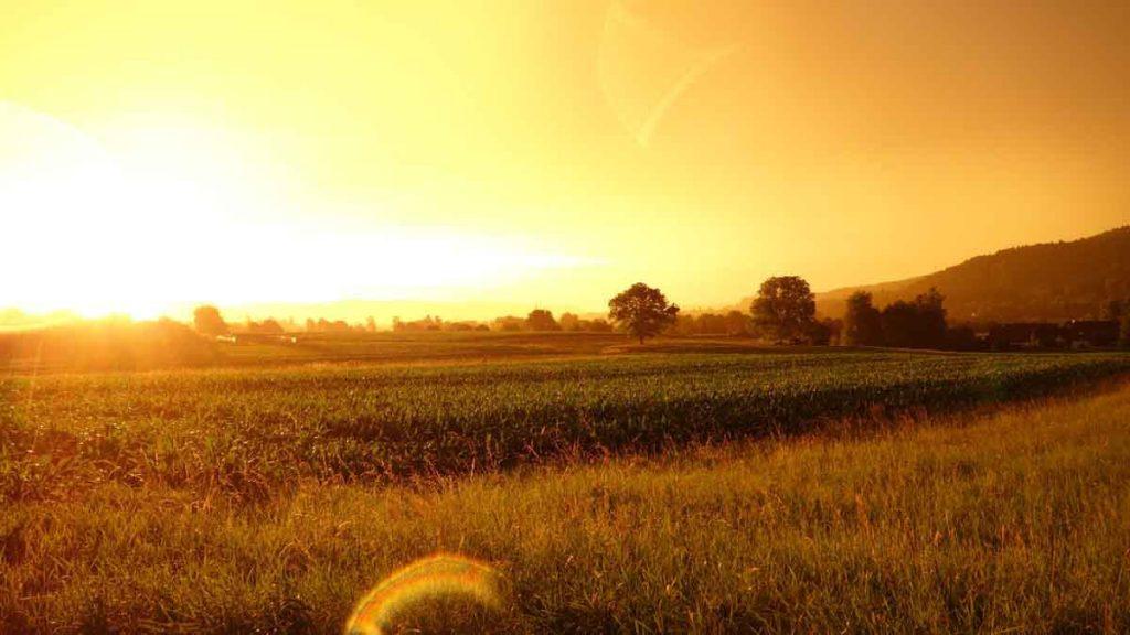 agricoltura biologica campi colture