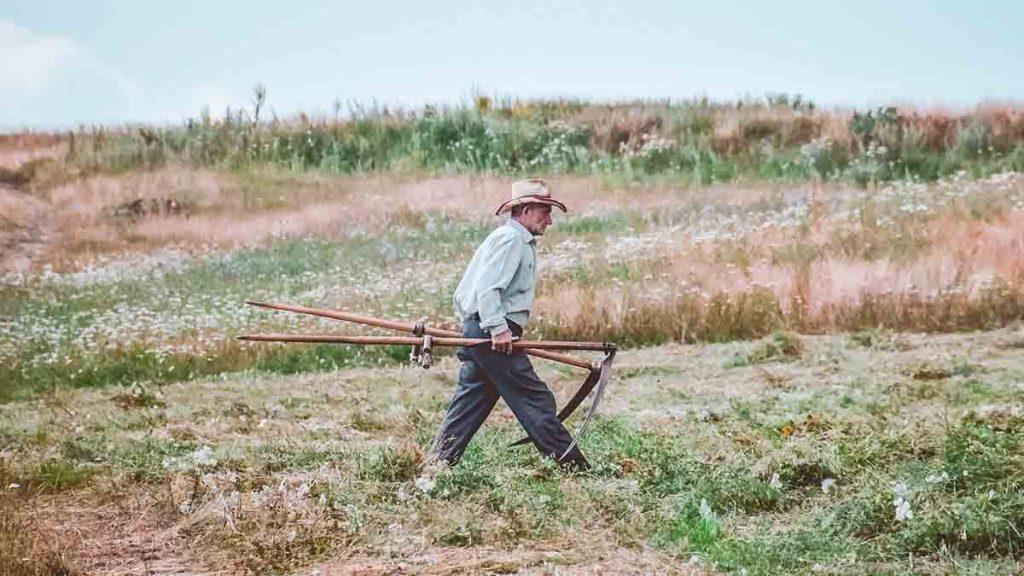agricoltura biologica erbe spontanee