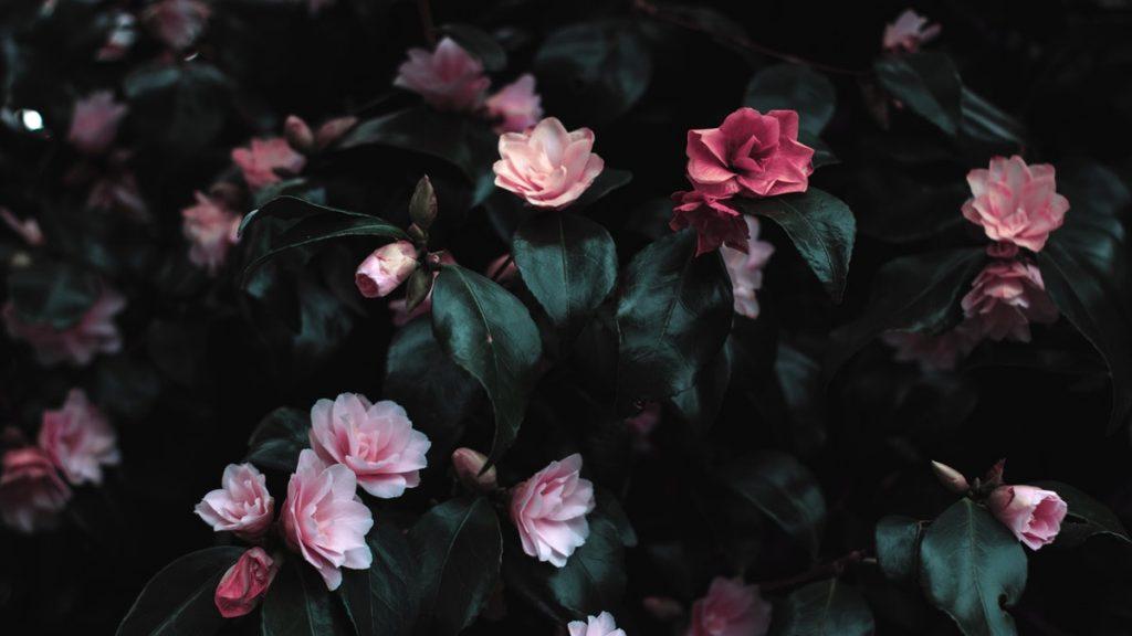 fiori di plastica lavastoviglie