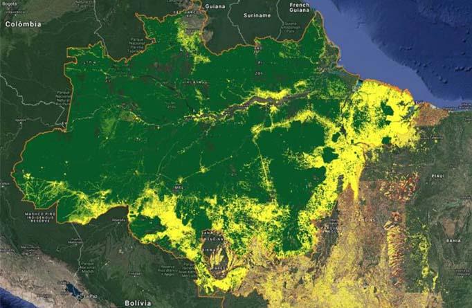deforestazione brasile amazzonia giallo