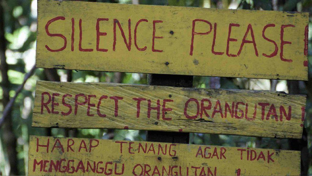 Volontariato ambientale silenzio orango
