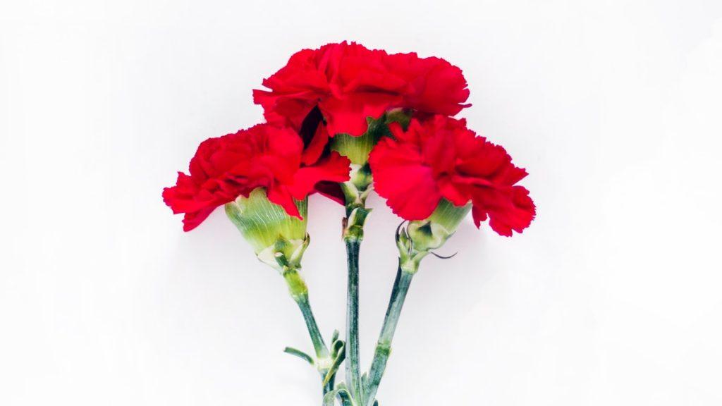gerani fiori commestibili