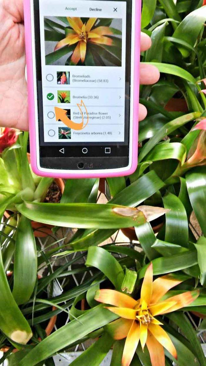 bromelia plantsnap copia