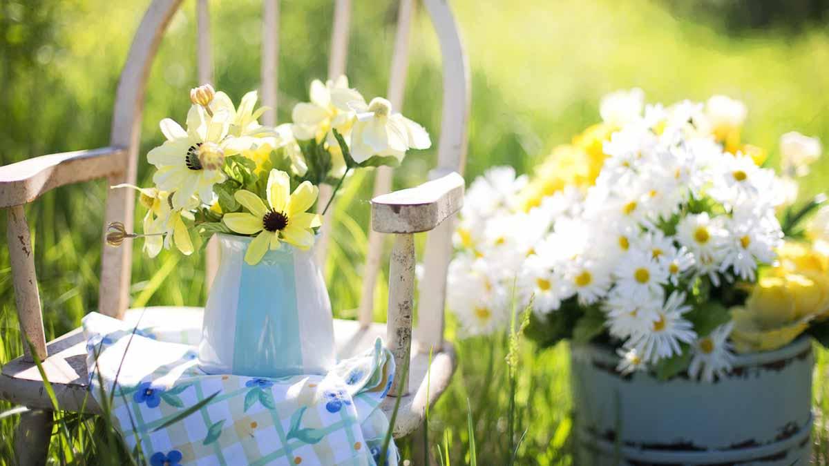 Fiori E Piante Commestibili fiori commestibili: quali sono, le proprietà, che gusto