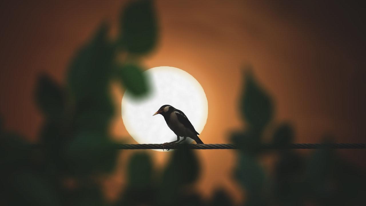 protezione ambientale uccelli wyss