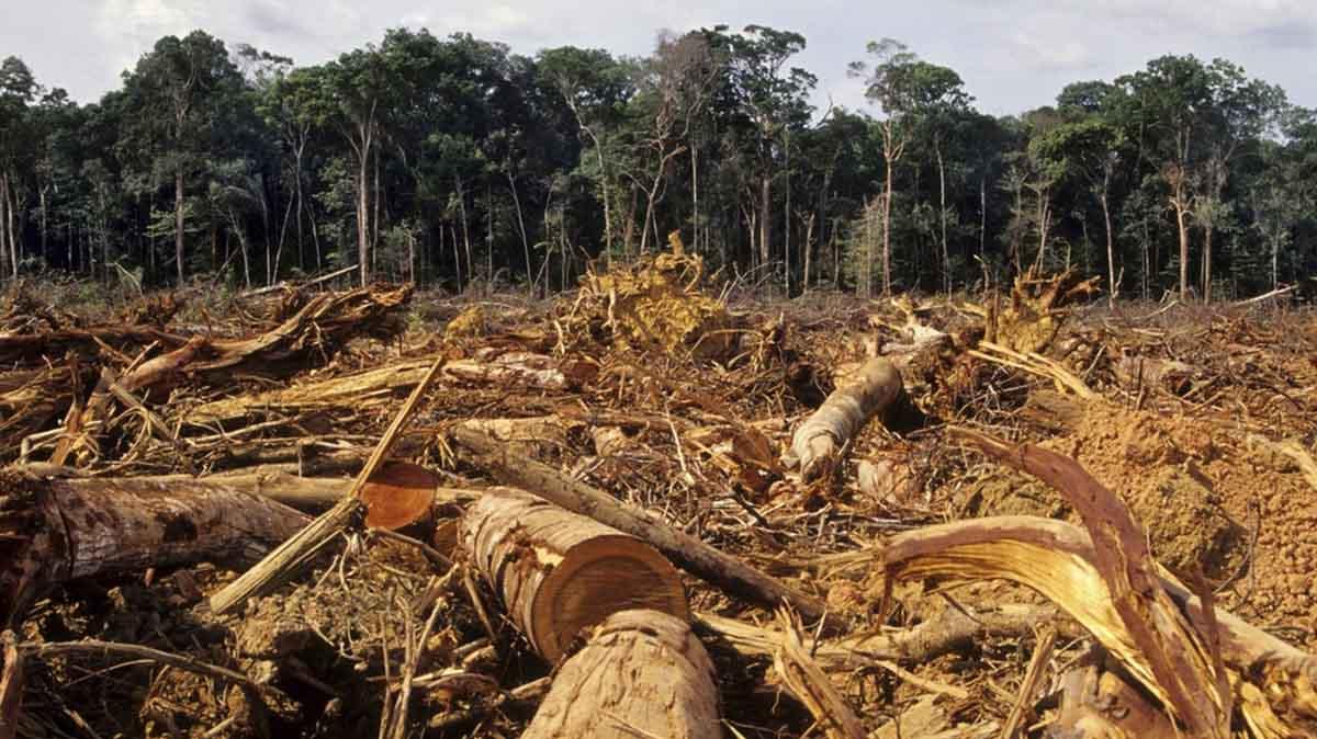 deforestazione olio di palma