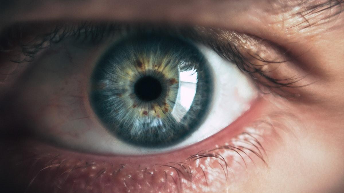 retina umana