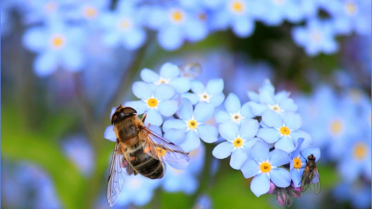 api e impollinazione