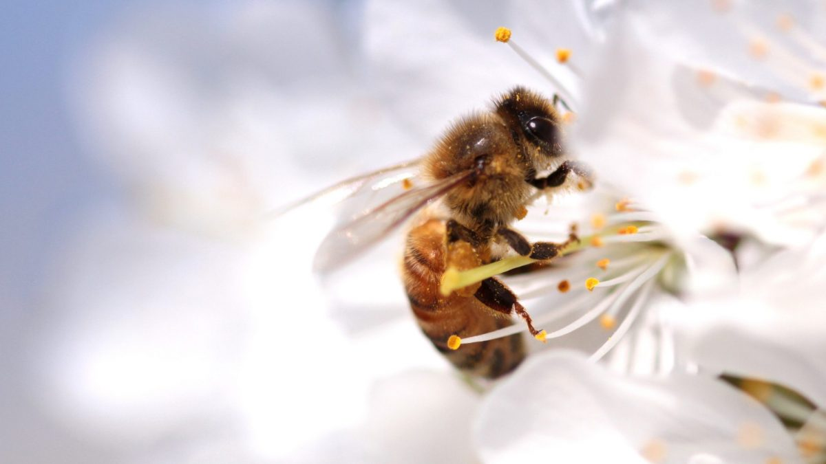 POLLINATE THE PLANET