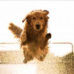 Tutti gli step per realizzare un cancello per cani fai da te