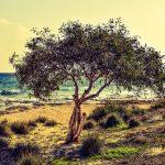 """Imidacloprid per fermare la Xylella in Puglia, stop dell'Ue: """"Uccide le api"""""""