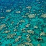 """Barriera corallina: la prossima generazione """"non potrà mai vedere la bellezza del reef"""""""